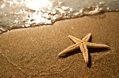 starfish 269